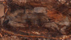 Brown Petryfied Wood